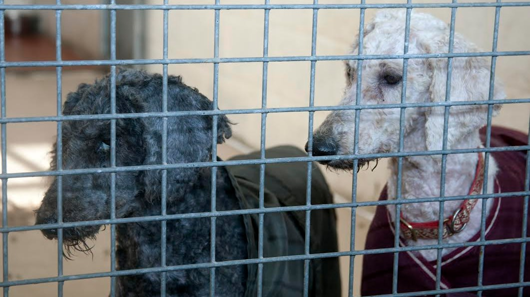 Dog Rescue Chichester Area