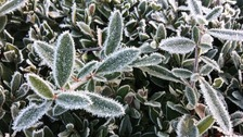 Frosty weather picture