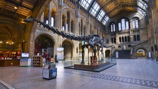 Dippy the dinosaur forced into retirement by huge blue whale at Natural History Museum