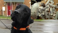 Colin the dog sniffs out 6,000 illegal cigarettes