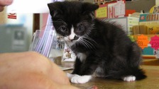 Both surviving kittens have now been rehomed