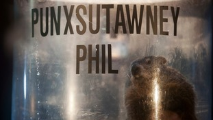 'Punxsutawney Phil' prepares to make his prediction.