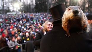 Thousands gathered at Gobbler's Knob to see what Phil would predict.