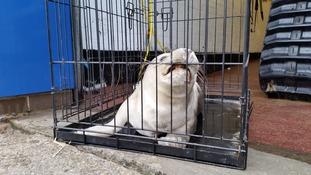 Seal rescue