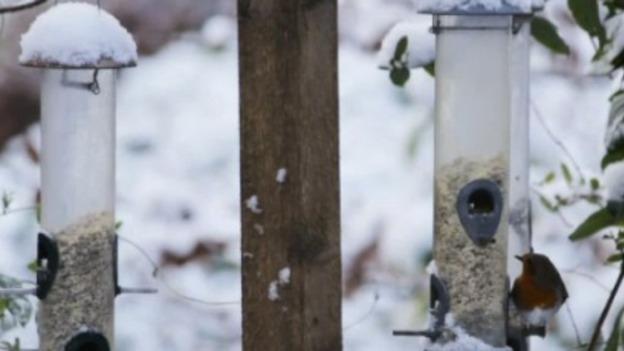 Birds_snow