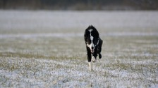 """Snow coming down """"thick and fast"""" in King's Lynn, Norfolk."""