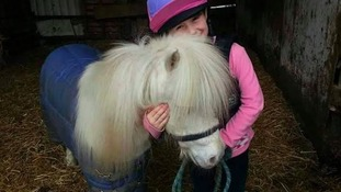 10-year-old girl devastated at theft of elderly pony