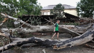 A boy walks on an uprooted tree in a street hit by floods in the town of Krymsk
