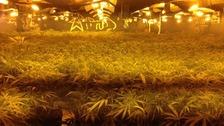 Vannabis