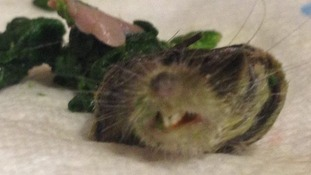 Woman planning to treat her mum to dinner finds severed rat head in a bag of spinach