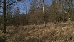 Fineshade Wood near Corby.