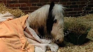 Thousands raised for abandoned foal