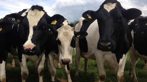 Dairy farmers fear for their future