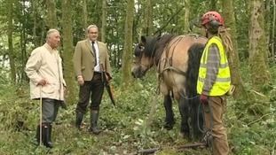 Prince Charles with a horse