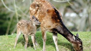 Kita and her mum