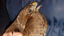 A £1,000 reward has been offered for anyone who has information about a buzzard which was found with serious injuries.