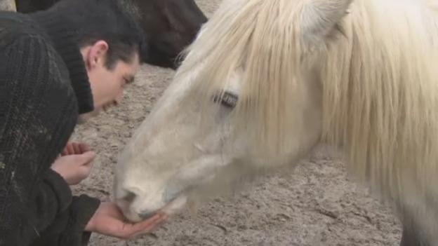 P-HORSE_RESCUE_LK