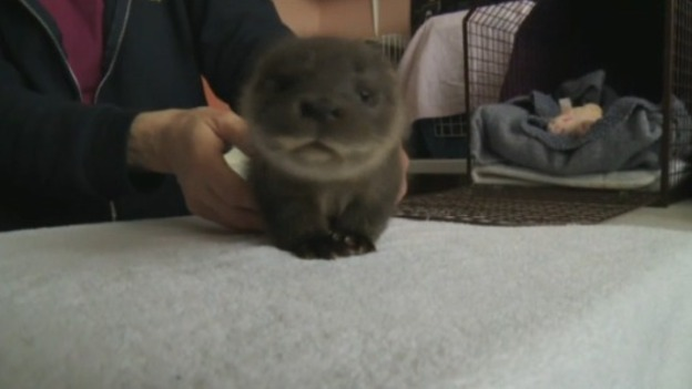OTTER_FOR_WEB