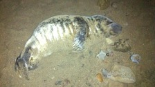 The seal was found on Saltburn beach