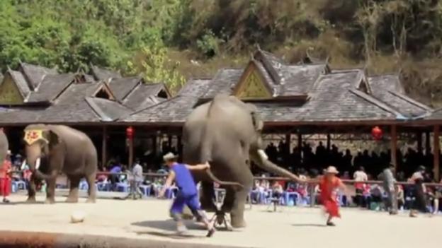 ElephantsChina