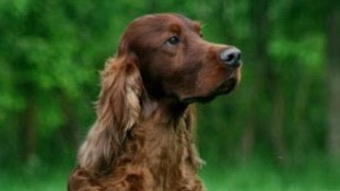 Shock as Crufts show dog dies amid poisoning fears