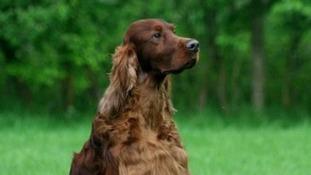 Owners of 'poisoned' Crufts dog speak of devastation.