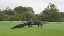 The golf club said it had been asked whether the image of the reptile had been doctored.