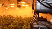 Cannabis factory found in Twerton