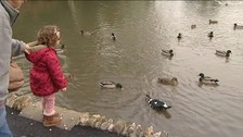 The Canal and River Trust says oats or peas should be used to feed ducks, not bread
