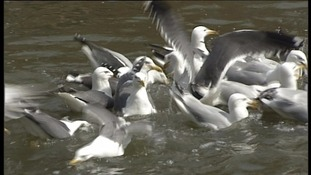 People in Bath warned to take action against seagulls