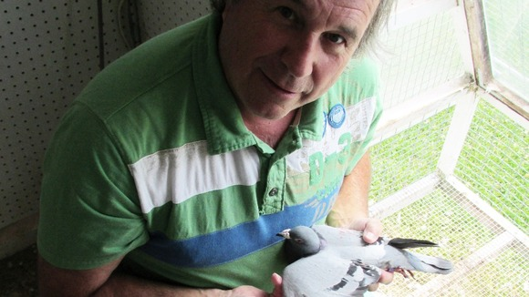 Michel Gosselin, Canadian pigeon fancier, with the bird from Staffordshire
