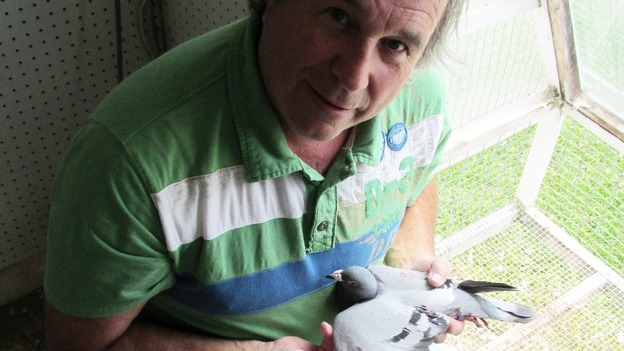 Michel Gosselin, Canadian pigeon enthusiast with Percy