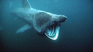 Shark alert: Beach evacuated off coast of Devon