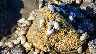 Sea life uncovered in Minehead at low tide
