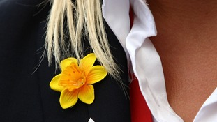 Marie Curie Daffodil