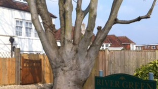 Tree shaped like a hand