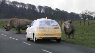 Longleat offers bubble-wrapped vehicles