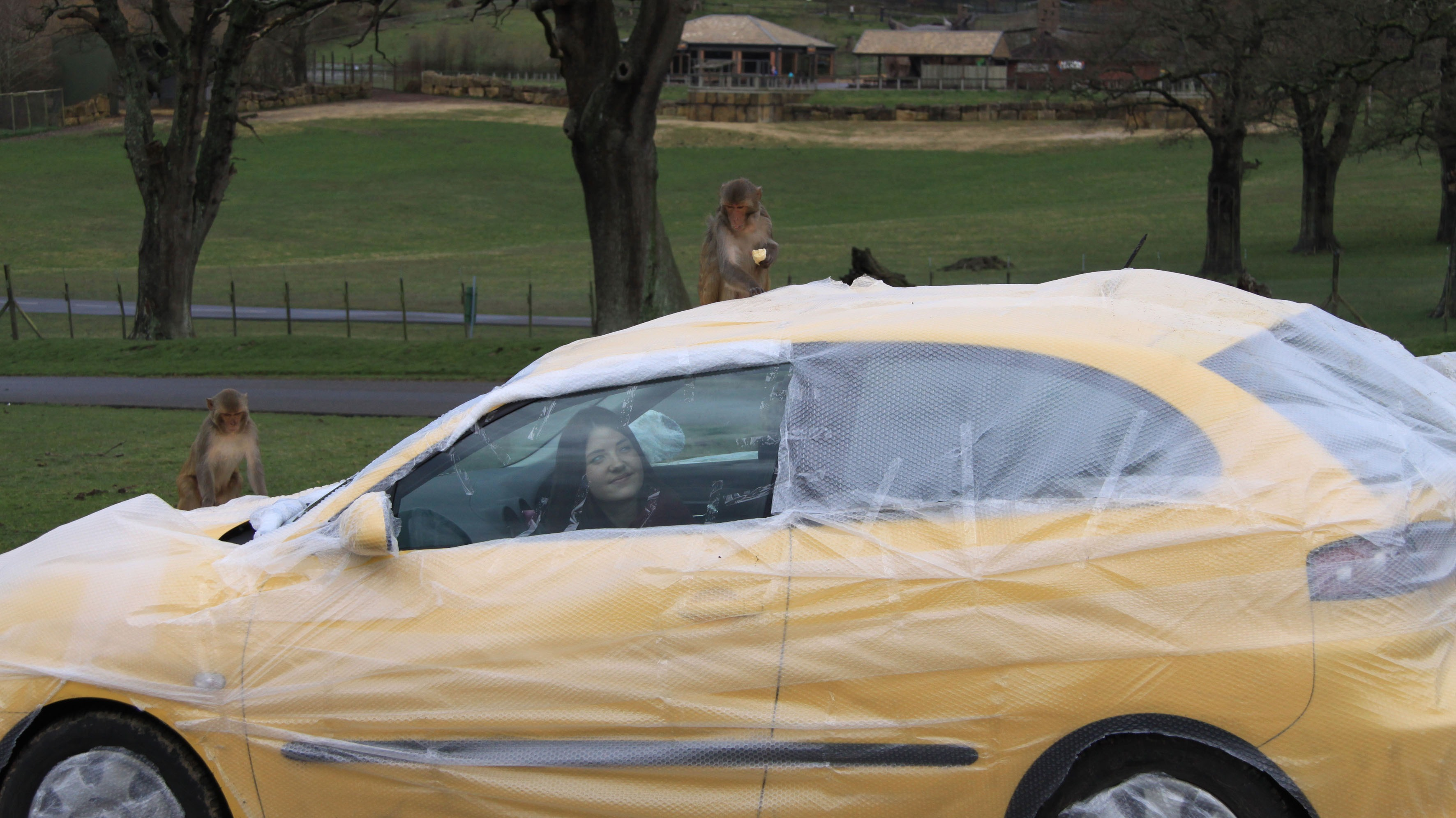 longleat offers bubble wrapped cars west country itv news. Black Bedroom Furniture Sets. Home Design Ideas
