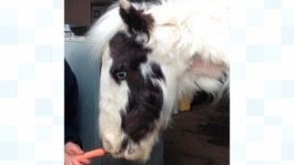 Support pours in for abandoned foal
