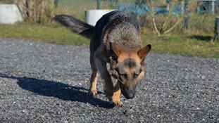 Dogs '98% reliability' sniffing prostate cancer - study.