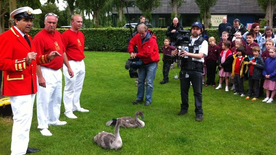 ITV Meridian&#x27;s camera man Mick Hopley prepares for a close up on cygnets 