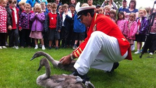 The Queen's Swan Marker shows school children how to measure cygnets