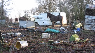 Horses and ponies were kept in an area of woodland and scrub strewn with rubbish and abandoned vehicles