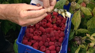 Soggy summer hits fruit farmers