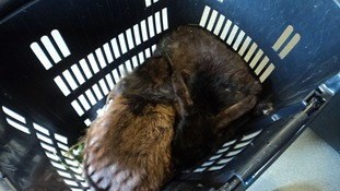 Rabbits were found in this shopping basket