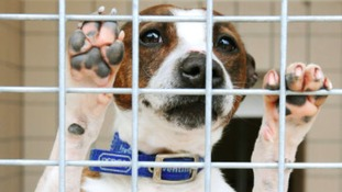 'Horrific' year for animal cruelty cases, RSPCA reports