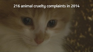 Animal cruelty complaints up in Cumbria