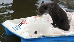Loki enjoys a light snack aboard his very own boat