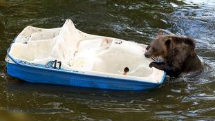 Nellie struggles to get aboard