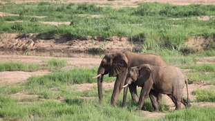 There are fears once poachers have finished off the elephant stock in these parks they move onto others.